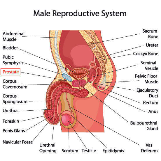 prostate health check warwickshire graphic