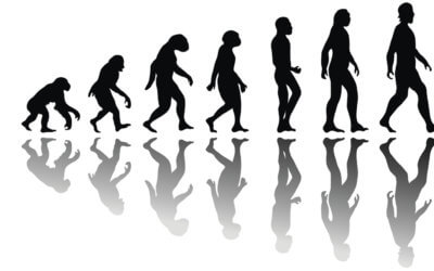 The Evolutionary Advantages Of Decreasing Testosterone